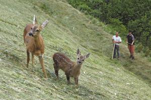 Rehe am Berghof in Südtirol